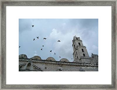 Birds Flying Above The Basilica And The Monastery Of Saint Francis Of Assisi Framed Print by Sami Sarkis