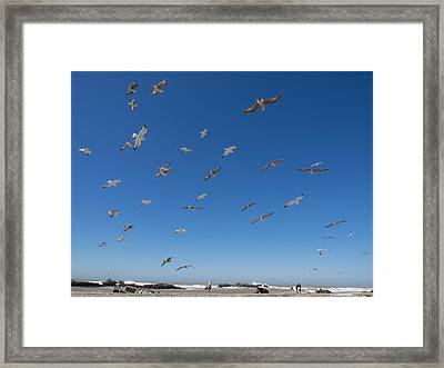 Birds Flying Along The Waters Edge Framed Print by Panoramic Images