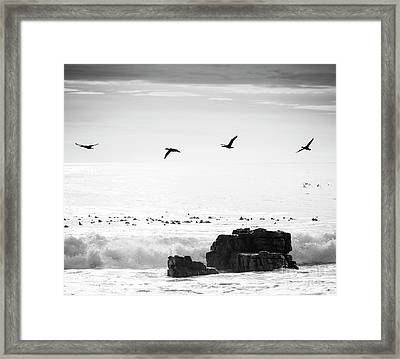 Framed Print featuring the photograph Birds Flying Over Ocean Black And White by Tim Hester