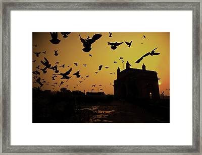 Birds In Flight At Gateway Of India Framed Print