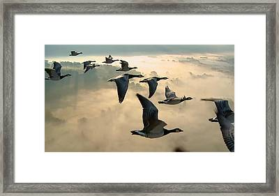 Birds In Flight Framed Print