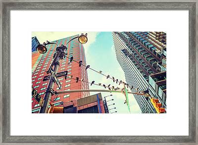 Birds In New York City Framed Print