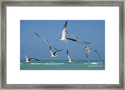 Birds In Paradise Framed Print by Jan Daniels