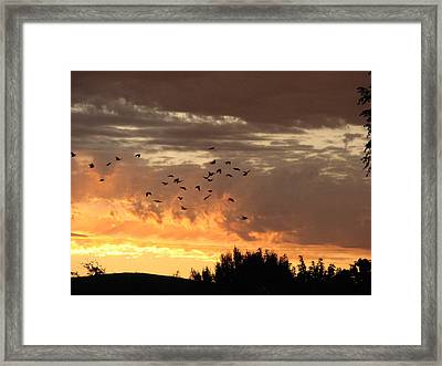 Birds In The Sky Framed Print by Kathy Roncarati