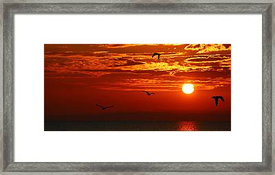 Birds In The Sun Framed Print