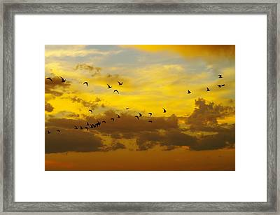 Birds In The Sunset Framed Print by Jeff Swan