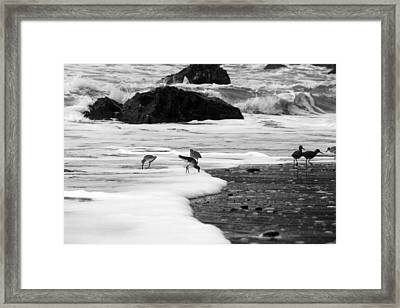 Birds In The Waves Black And White Framed Print