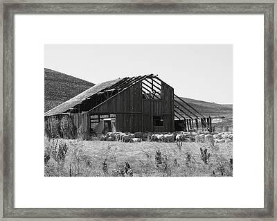 Birds Landing Barn Framed Print by Troy Montemayor