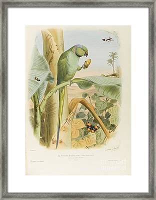 Birds Most Remarkable Their Forms And Colors Framed Print