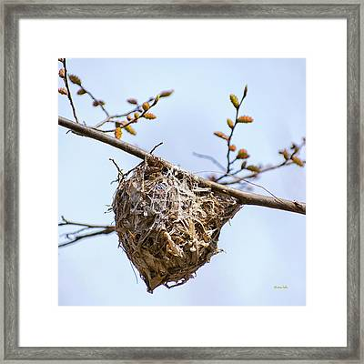Framed Print featuring the photograph Birds Nest by Christina Rollo