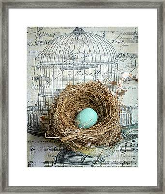Birds Nest Framed Print by Edward Fielding
