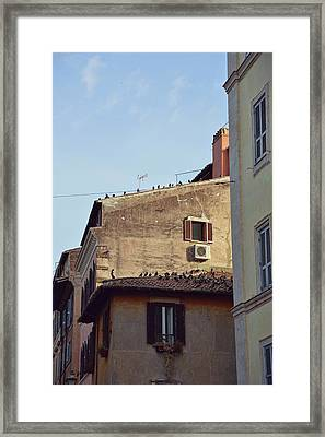 Birds Of A Feather Framed Print by JAMART Photography