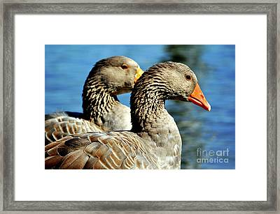 Birds Of A Feather Framed Print by Molly McPherson