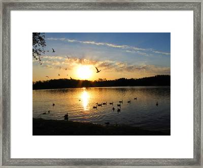 Birds Of A Feather Framed Print by Scott Hovind