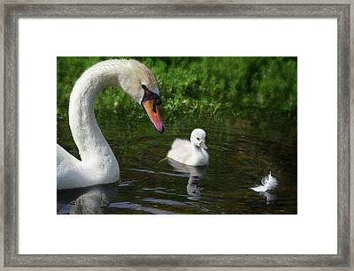 Birds Of Feather... Framed Print