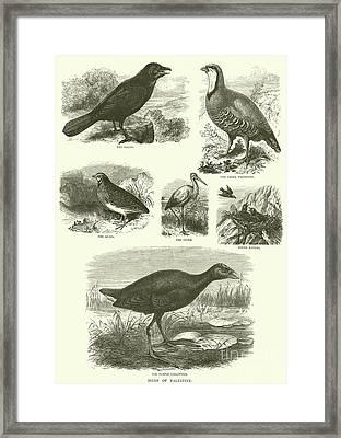 Birds Of Palestine  Framed Print