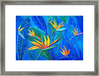 Birds Of Paradise Framed Print by Anne Sands