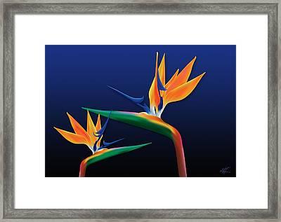 Birds Of Paradise Framed Print by Kenneth Armand Johnson