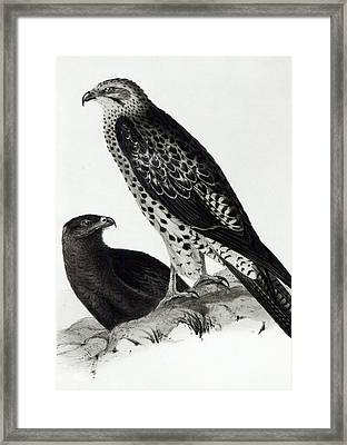 Birds Of Prey Framed Print