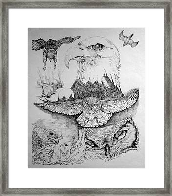 Birds Of Prey Collage Two Framed Print