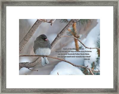 Birds Of The Air Framed Print by David Arment