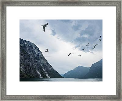 Birds Of The Fjords Of Norway Framed Print
