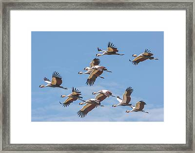 Birds Of The Same Feather. Framed Print