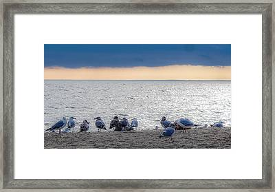 Framed Print featuring the photograph Birds On A Beach by Kendall McKernon