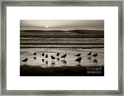 Birds On A Beach Framed Print