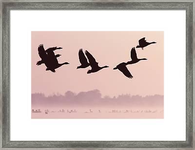 Birds On A Mission Framed Print