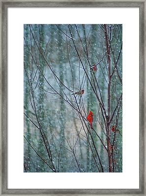 Birds On A Snowy Day Framed Print