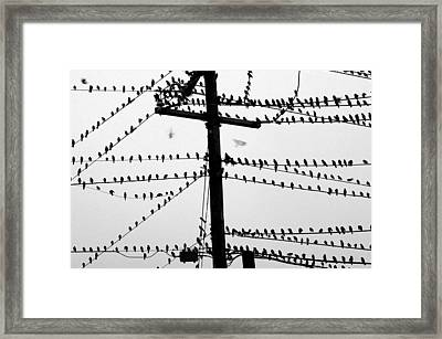 Birds On A Wire Framed Print by Don Prioleau