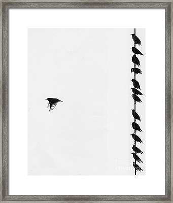 Birds On A Wire Framed Print by Jim Wright