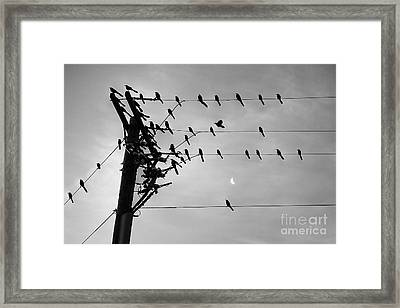 Birds On A Wire Framed Print by Lionel Martinez