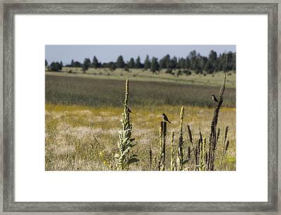 Framed Print featuring the photograph Birds On Stands by Laura Pratt
