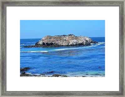 Bird Rock Framed Print