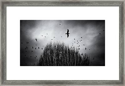 Birds Over Bush Framed Print by Peter v Quenter