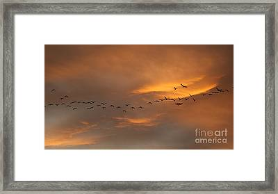 Birds Over San Miguel De Allende Framed Print by John  Kolenberg