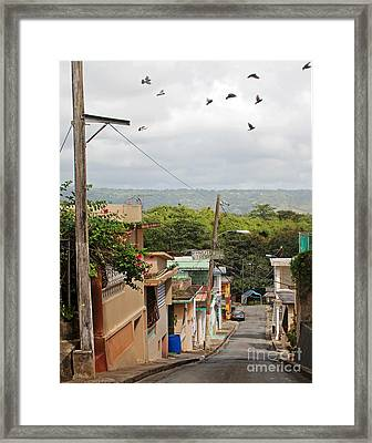 Birds Over Yabucoa Framed Print