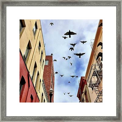 Birds Overhead Framed Print