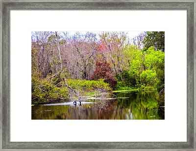 Birds Playing In The Pond 3 Framed Print