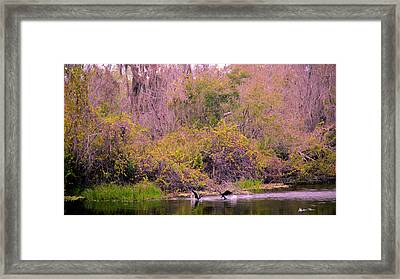Framed Print featuring the photograph Birds Playing In The Pond 2 by Madeline Ellis
