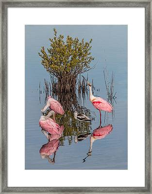 Birds, Reflections, And Mangrove Bush Framed Print