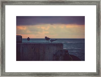 Birds Framed Print by Scott Meyer