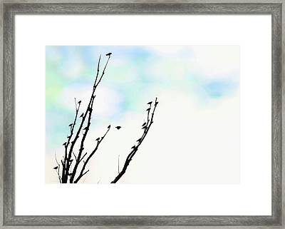 Framed Print featuring the photograph Birds Silhouette In Tree Blue by Jennie Marie Schell