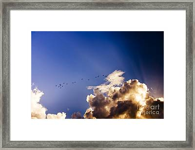 Birds Soaring Sky High  Framed Print by Jorgo Photography - Wall Art Gallery