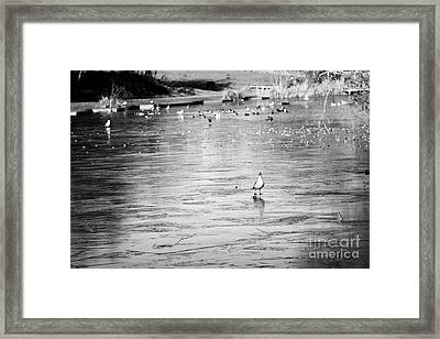 Birds Walking On Frozen Small Lake Pond On A Cold Winter Morning In The Uk Framed Print by Joe Fox