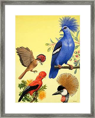 Birds With Crowns Framed Print