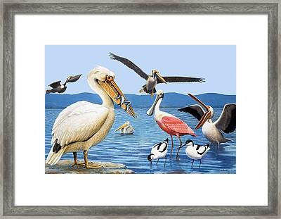 Birds With Strange Beaks Framed Print by R B Davis