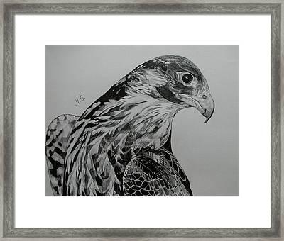 Birdy Framed Print